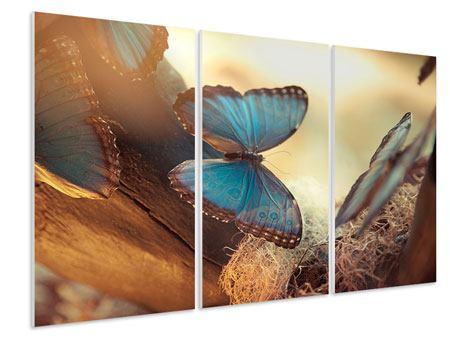 Hartschaumbild 3-teilig Schmetterlinge