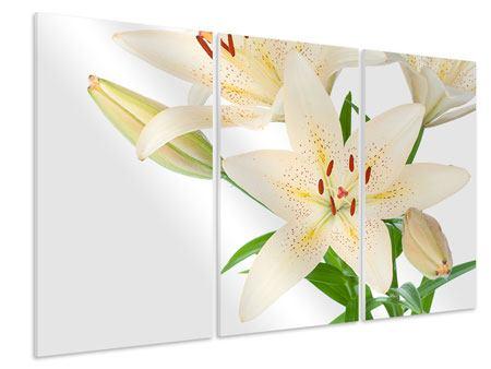 Hartschaumbild 3-teilig Weisser Lilienstrauch