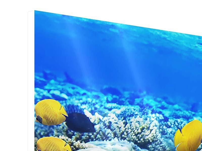Hartschaumbild 3-teilig Fischaquarium