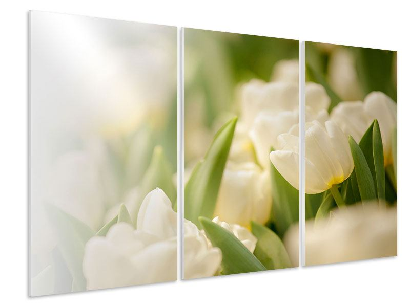 Hartschaumbild 3-teilig Tulpenperspektive