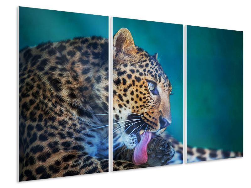 Hartschaumbild 3-teilig Leopard XL