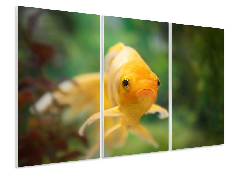 Hartschaumbild 3-teilig Der Fisch