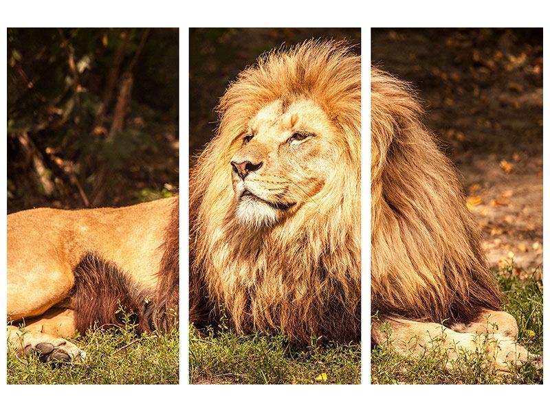 Hartschaumbild 3-teilig Löwe