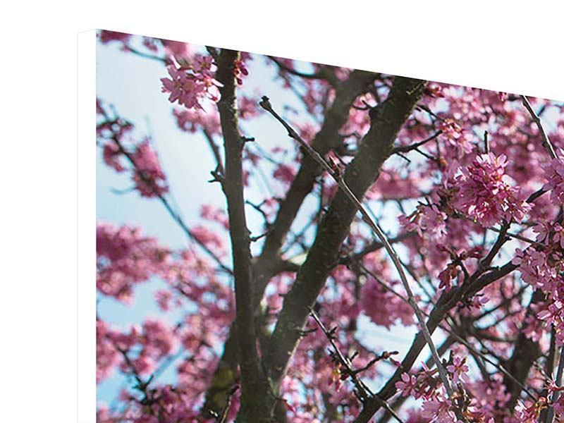 Hartschaumbild 3-teilig Japanische Blütenkirsche