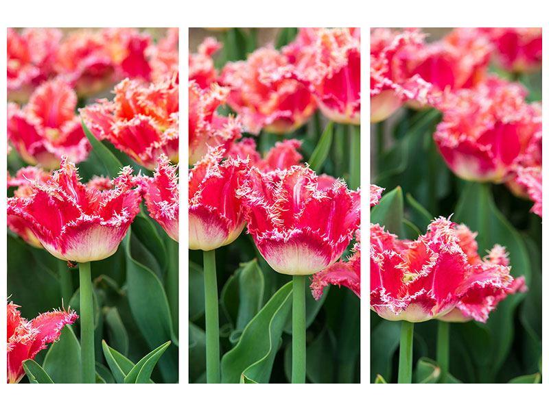 Hartschaumbild 3-teilig Die Tulpenwiese