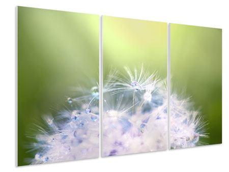 Hartschaumbild 3-teilig Pusteblume XL im Morgentau