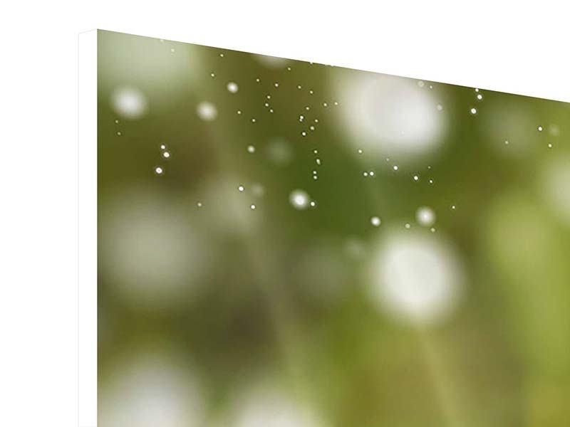 Hartschaumbild 3-teilig Lilien-Lichtspiel