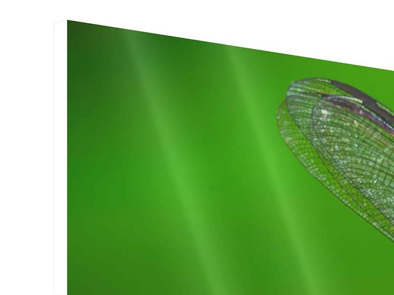 Hartschaumbild 3-teilig Die Libelle