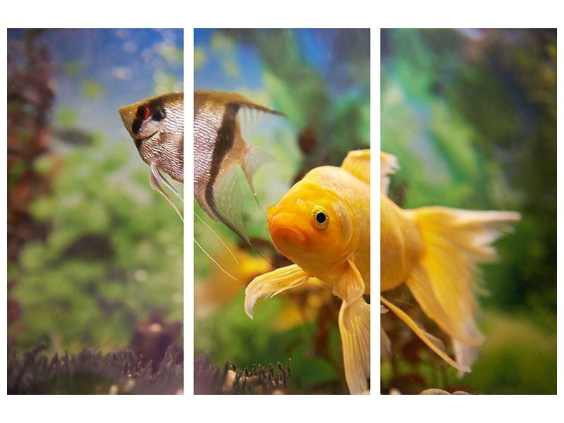 Hartschaumbild 3-teilig Bunte Fische