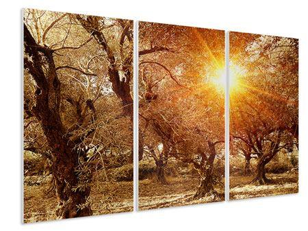Hartschaumbild 3-teilig Olivenbäume im Herbstlicht