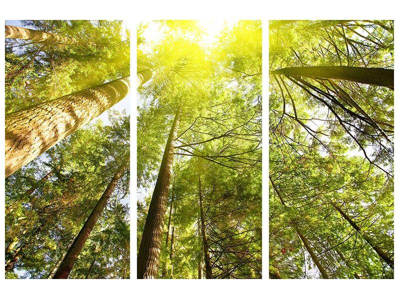 Hartschaumbild 3-teilig Baumkronen in der Sonne