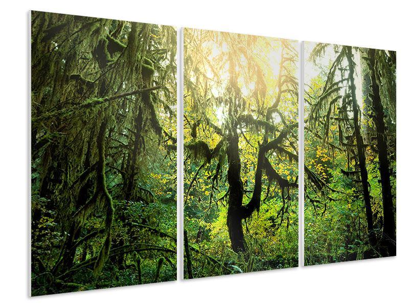 Hartschaumbild 3-teilig Verträumter Wald