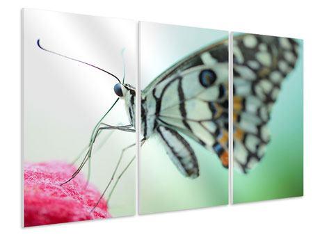 Hartschaumbild 3-teilig Schmetterling XXL