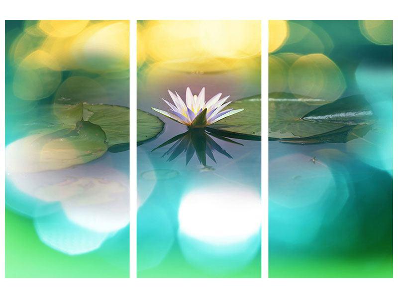 Hartschaumbild 3-teilig Lotus-Spiegelung