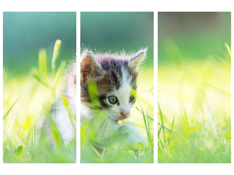 Hartschaumbild 3-teilig Kitten