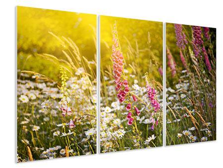 Hartschaumbild 3-teilig Sommerliche Blumenwiese