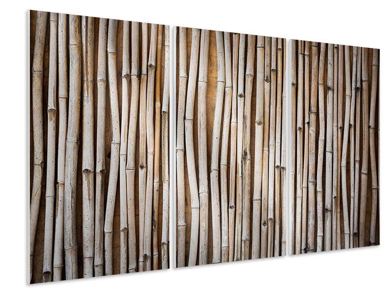 Hartschaumbild 3-teilig Getrocknete Bambusrohre