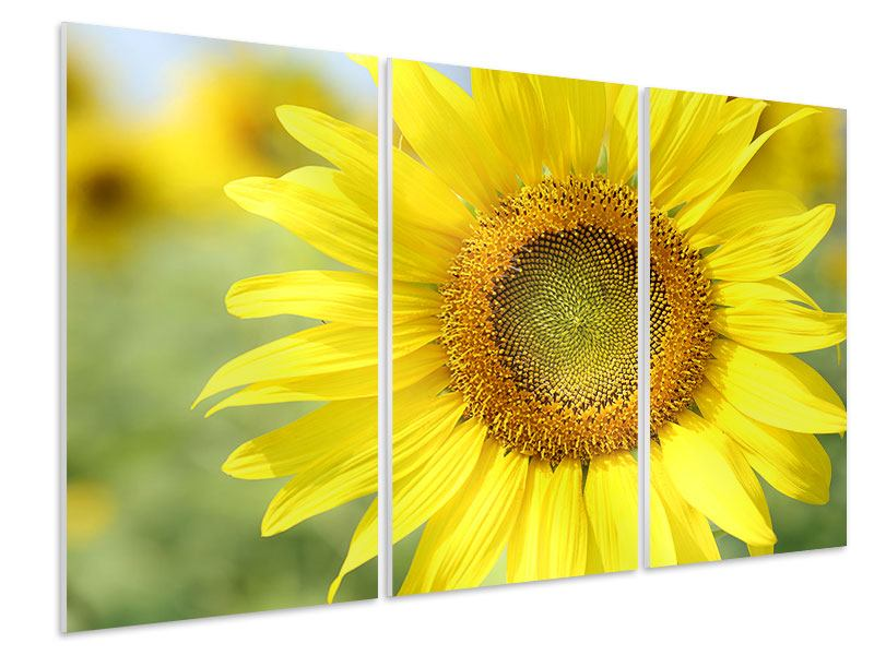 Hartschaumbild 3-teilig Die Blume der Sonne