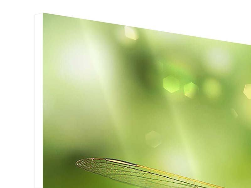 Hartschaumbild 3-teilig XXL-Libelle