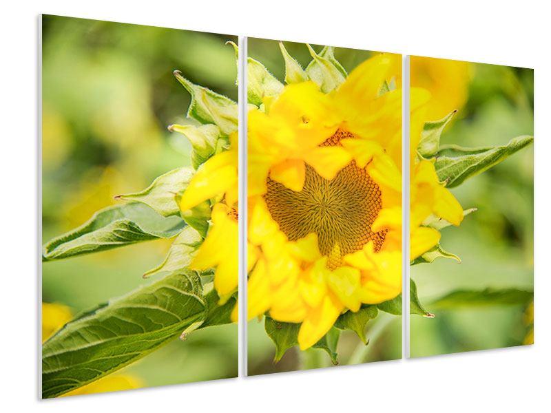 Hartschaumbild 3-teilig Wilde Sonnenblume