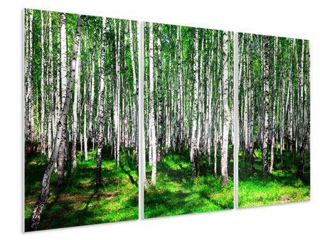 Hartschaumbild 3-teilig Sommerlicher Birkenwald