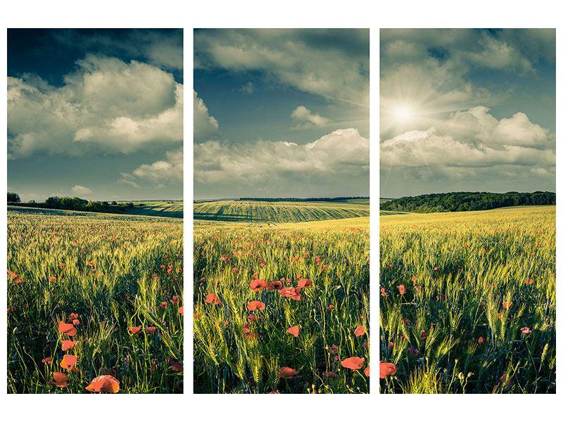 Hartschaumbild 3-teilig Der Mohn im Weizenfeld