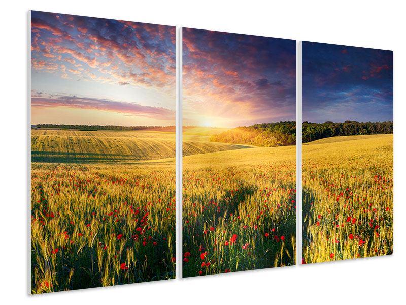 Hartschaumbild 3-teilig Ein Blumenfeld bei Sonnenaufgang