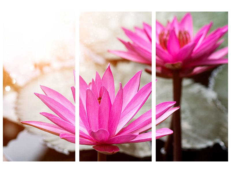 Hartschaumbild 3-teilig Lotus-Duo