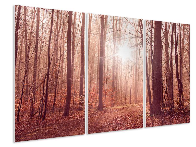 Hartschaumbild 3-teilig Sonnenuntergang im Herbstwald