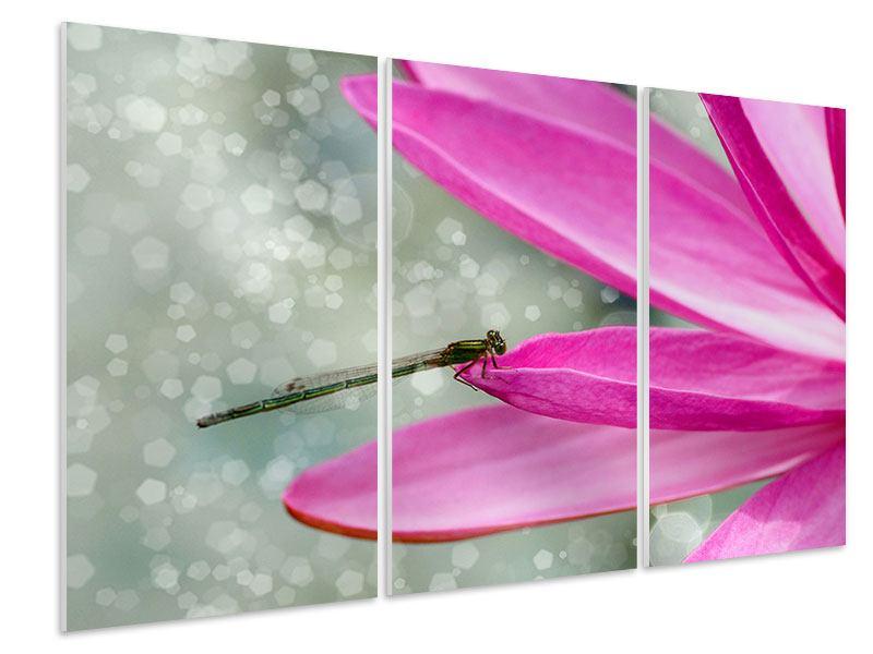 Hartschaumbild 3-teilig Libelle auf dem Seerosenblatt
