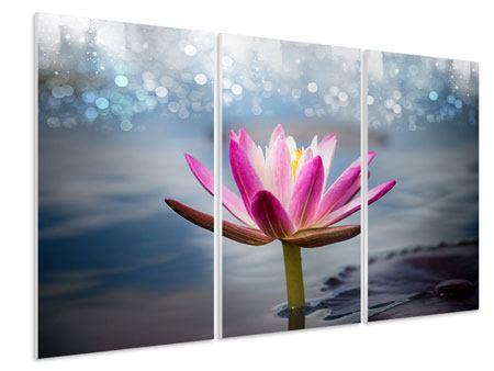 Hartschaumbild 3-teilig Lotus im Morgentau