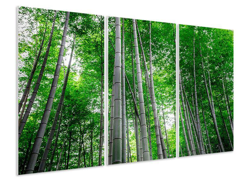 Hartschaumbild 3-teilig Bambuswald