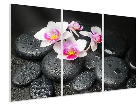Hartschaumbild 3-teilig Feng-Shui-Orchidee Zen