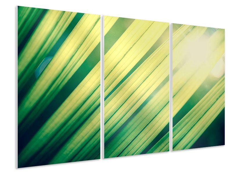 Hartschaumbild 3-teilig Beleuchtetes Palmblatt