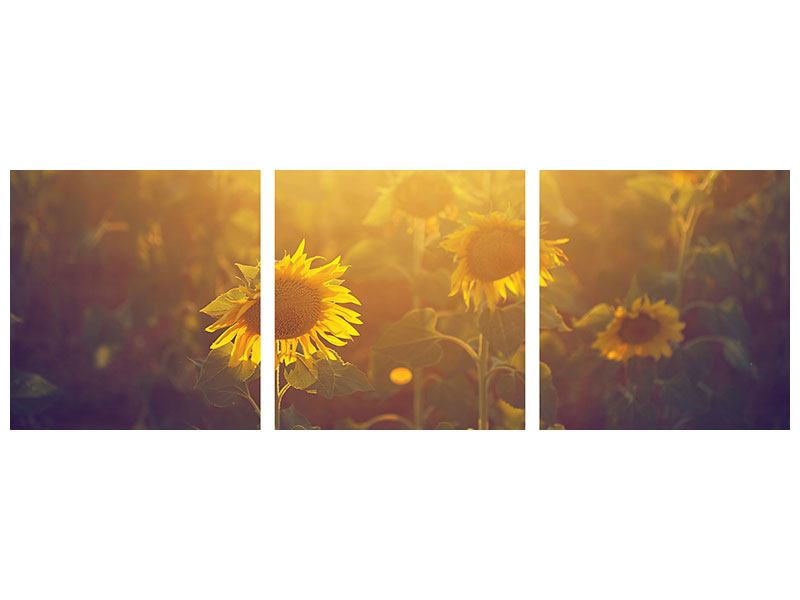Panorama Hartschaumbild 3-teilig Sonnenblumen im goldenen Licht