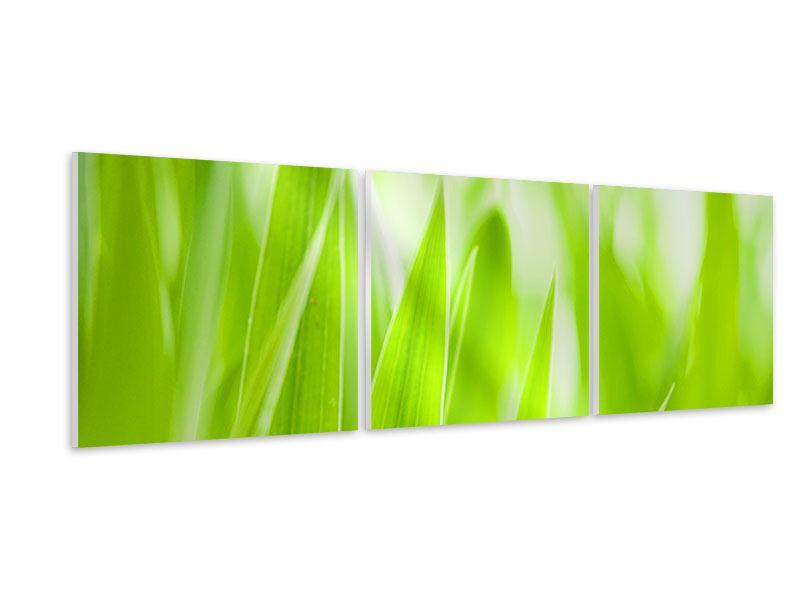 Panorama Hartschaumbild 3-teilig Gras XXL