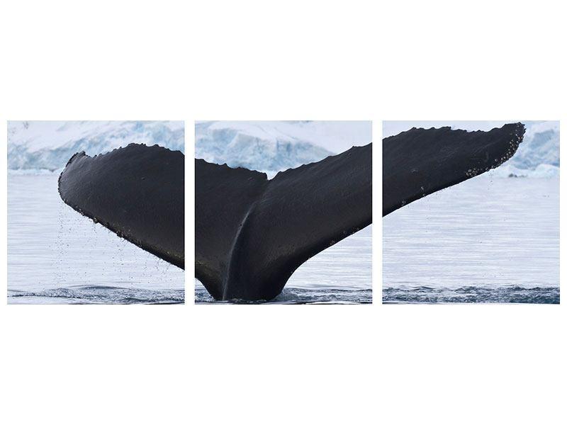 Panorama Hartschaumbild 3-teilig Der Buckelwal