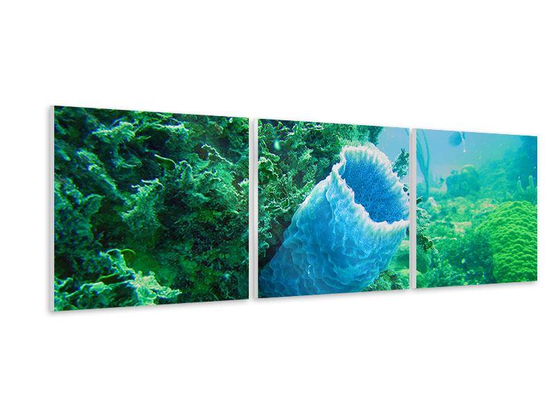 Panorama Hartschaumbild 3-teilig Korallen
