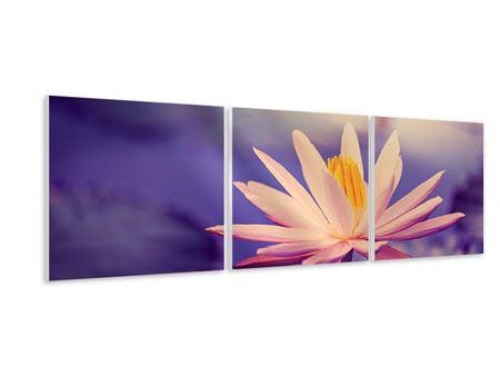 Panorama Hartschaumbild 3-teilig Lotus bei Sonnenuntergang