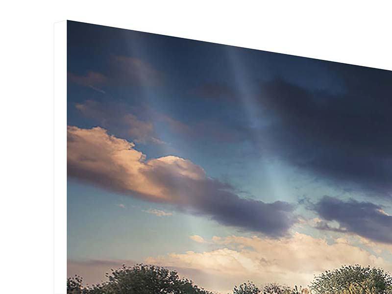 Panorama Hartschaumbild 3-teilig Die Wiesenmargerite am Fluss