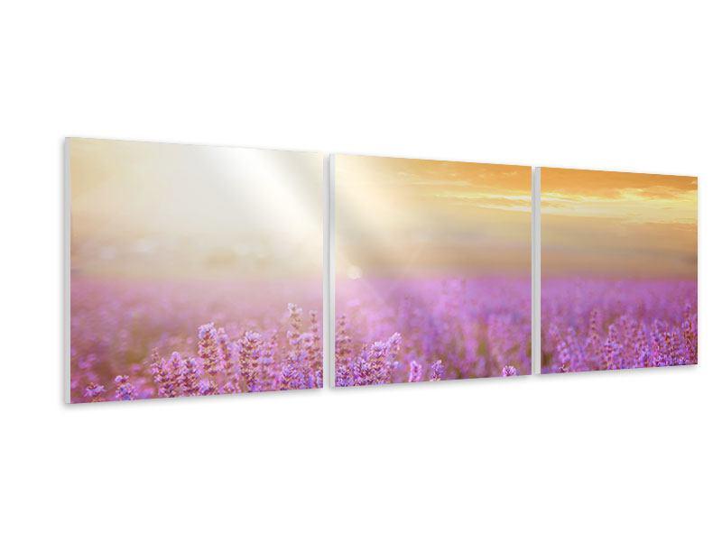 Panorama Hartschaumbild 3-teilig Sonnenuntergang beim Lavendelfeld