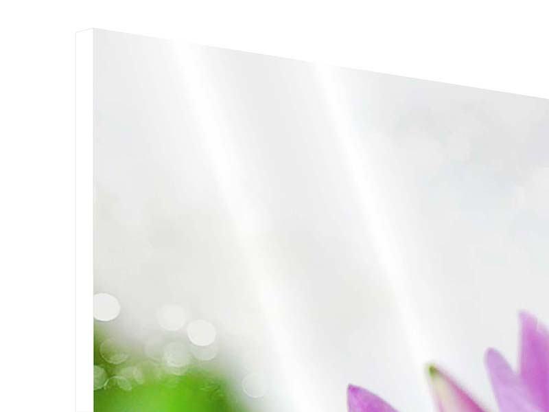 Panorama Hartschaumbild 3-teilig Die Lotus mit Biene