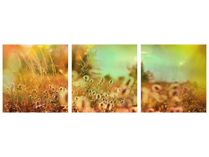 Panorama Hartschaumbild 3-teilig Blumenwiese in der Abenddämmerung