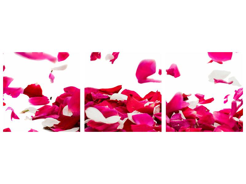 Panorama Hartschaumbild 3-teilig Für mich soll`s rote Rosen regnen