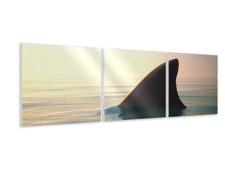 Panorama Hartschaumbild 3-teilig Haifischflosse