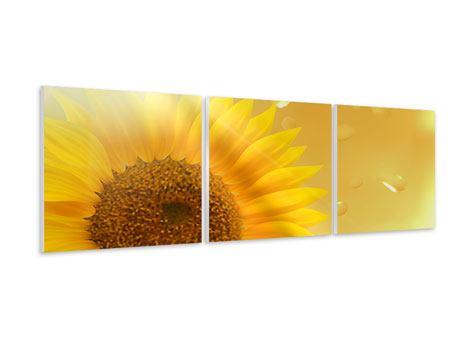 Panorama Hartschaumbild 3-teilig Sonnenblume im Morgentau