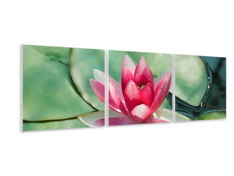 Panorama Hartschaumbild 3-teilig Der Frosch und das Lotusblatt