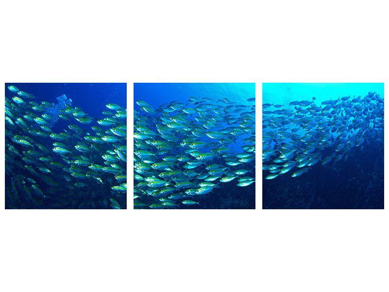 Panorama Hartschaumbild 3-teilig Fischschwarm