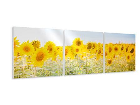 Panorama Hartschaumbild 3-teilig Im Sonnenblumenfeld