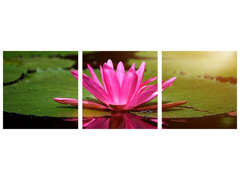 Panorama Hartschaumbild 3-teilig Lotus im Wasser